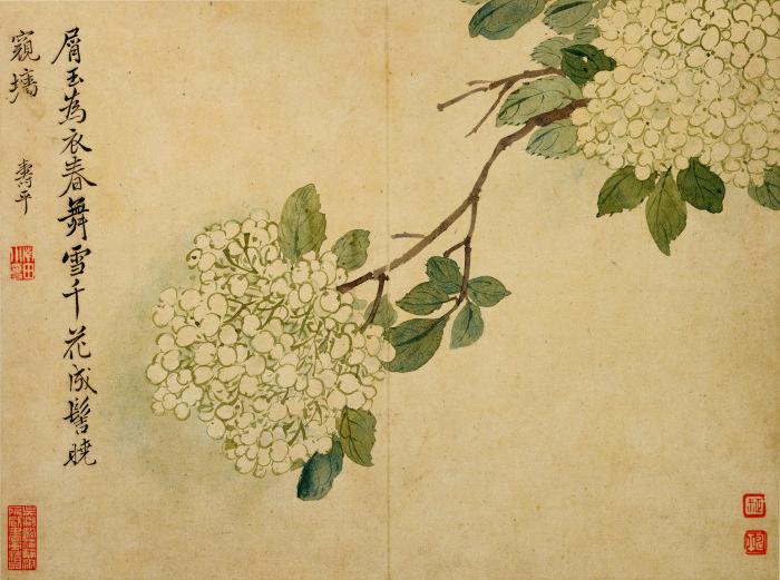 花鸟草虫-05