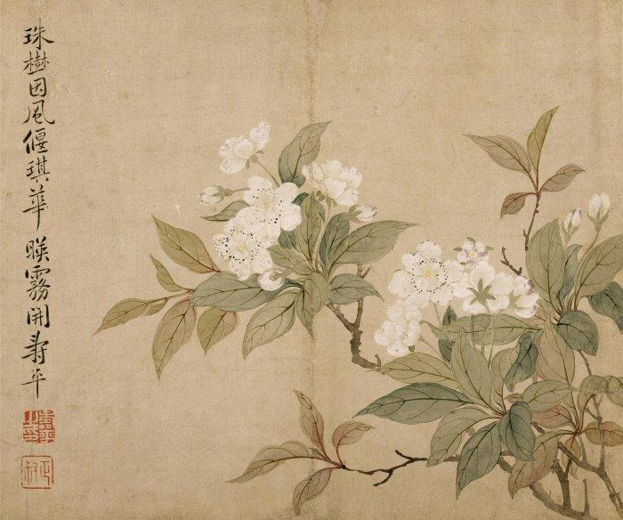 花卉图冊之三·梨花
